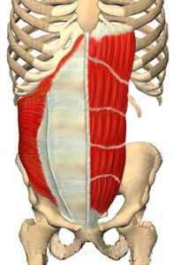 core muscles - transversus abdominus